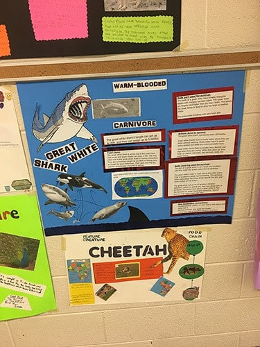 mrs t pickens class at east side intermediate school completed an animal adaptations poster project you can walk down dreams boulevard at the school to