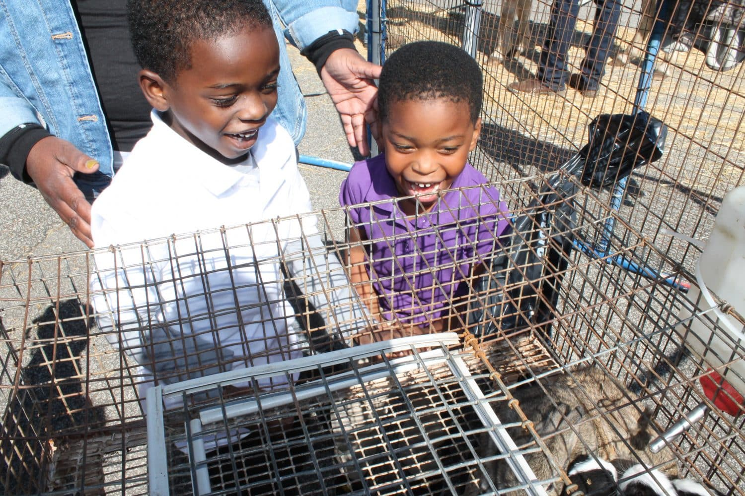 The Petting Zoo Visits Anderson